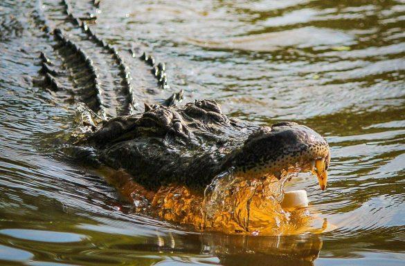 alligator-with-marshmallow